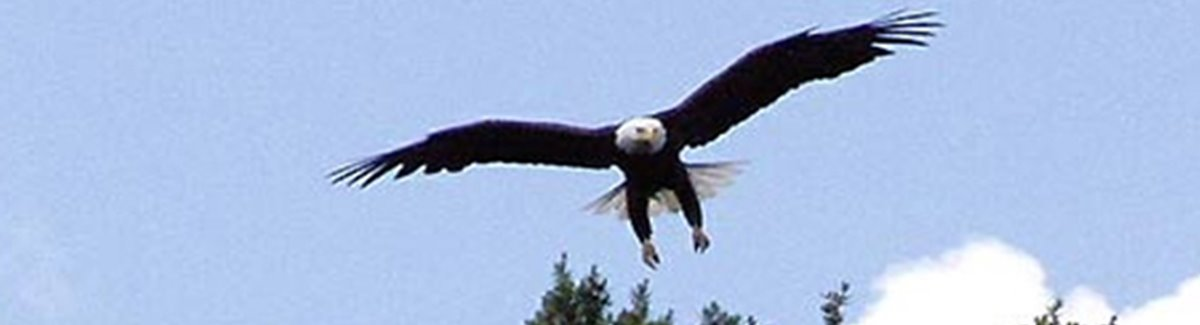 resorts-for-sale-canada-bald-eagle-landing