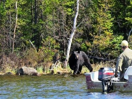 bear-hunting-fishing-hunting-resort-for-sale