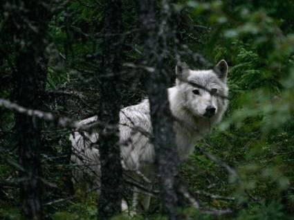 resorts-for-sale-canada-manitoba-resort-white-wolf-trees
