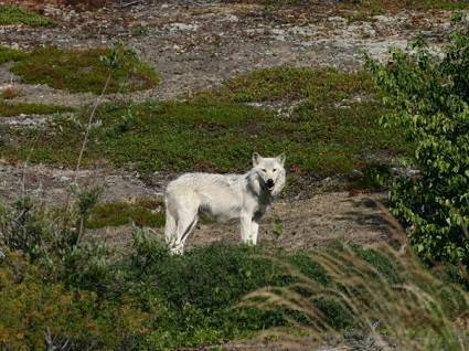 resorts-for-sale-canada-manitoba-resort-white-wolf